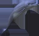 Dolphin - Written By Anna